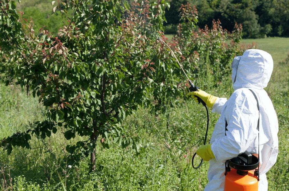 Бактериальный ожог: дезинфекция деревьев