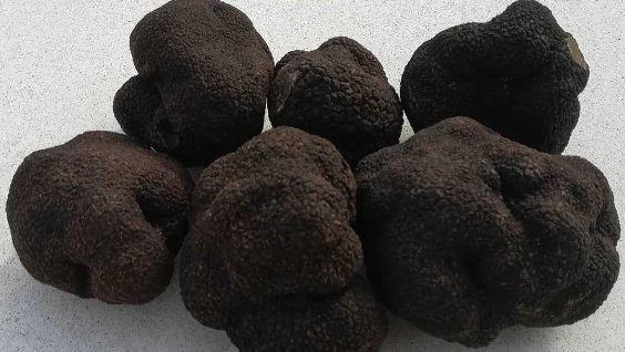 грибы трюфели, фото