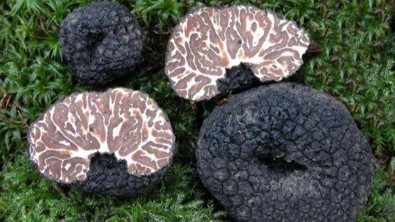 грибы трюфели