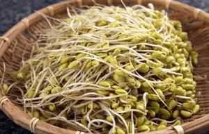 прорастание семян фасоли
