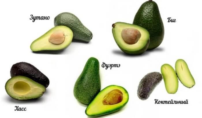 чем полезно авокадо для женщин