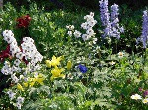 Цветник из многолетников непрерывного цветения: схема посадки