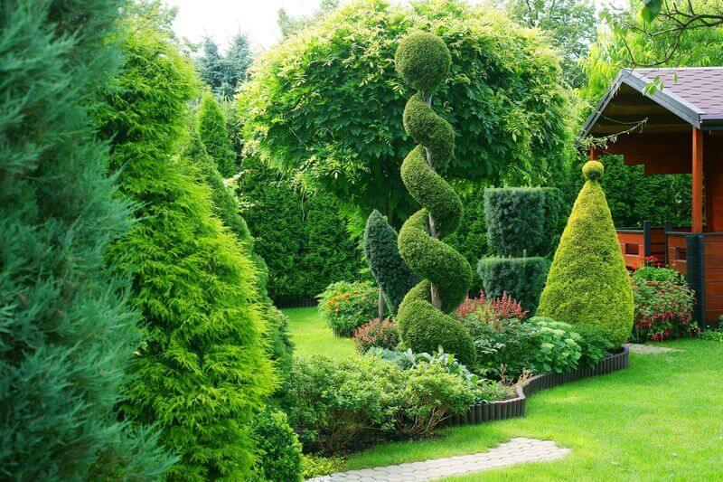 Клумбы из хвойных растений и кустарников: фото