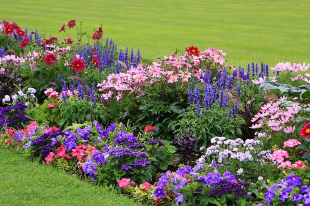 Летние цветы для клумбы: фото и названия